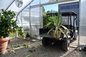 One of the benefits of using these hoop houses is that the Kawasaki and even the tractor can just roll in - this makes moving the plants much easier for the crew.