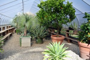 These plants actually spend about seven months of the year in this heated shelter - but they definitely thrive.