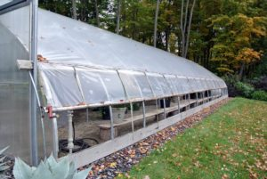 This is the heated hoop house where many of my tropical plants are moved to and kept safe from freezing temperatures. It has manual roll-up curtains on both sides for ventilation purposes.