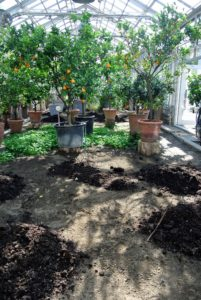 "We spend a good amount of time preparing the soil before planting any seeds. This includes cleaning the beds and adding organic, nutrient-rich compost I call ""black gold""."