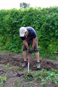 Ryan continued to dig around the soil - there are always more potatoes. Ryan and Laura picked every one they could find, even the tiniest of them. If not, they may grow into new plants, where they aren't wanted.