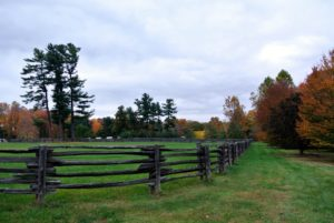 I get so compliments on the fencing around the farm - it is antique spruce fencing I bought in Canada, and it surrounds all my paddocks for the horses, ponies and donkeys.