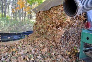 When the dump truck is full, the leaves are taken to the compost area, where they are piled up for decomposition to form mulch.
