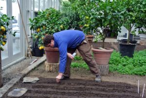 Ryan sprinkles the seeds in the furrows and then gently covers the rows with soil.