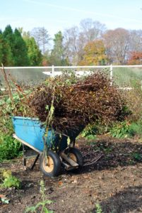 All the cuttings are taken to the compost pile.