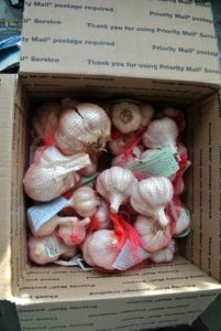 It's always exciting to get a box from Keene Organics filled with a variety of garlic bulbs for my garden. The box comes complete with an informational pamphlet explaining how to prepare and plant the garlic. Keene also recommends my blog as a good source for garlic tips. https://www.keeneorganics.com