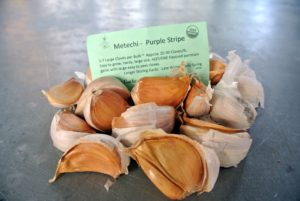 Metechi-Purple Stripe are easy to grow, with a hot, fire flavor.