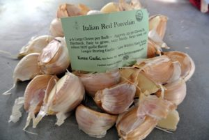 Italian Red Porcelain garlic has a hot garlic flavor. It grows well in northern regions and is a longer storing variety.