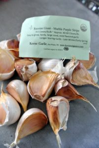 The Russian Giant Marble-Purple Stripe is easy to grow and gives off a mild garlic flavor.