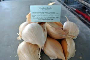 Elephant Garlic is actually a leek that resembles garlic in growing and in appearance. It has a very mild flavor.