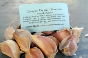 Georgian Crystal Porcelain has a medium rich flavor that's extremely popular among growers.