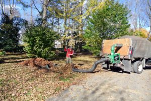 With so many leaves, a large leaf vacuum saves much time and labor.