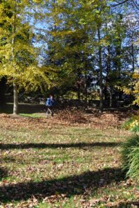 The outdoor grounds crew has been very busy blowing all the leaves from view around my house.