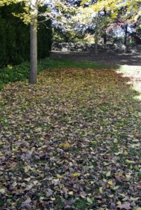 Leaves are falling everywhere around the farm.