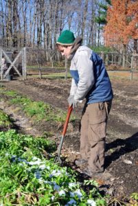 Since the ground was slightly frozen, Ryan loosened the soil with a garden fork.