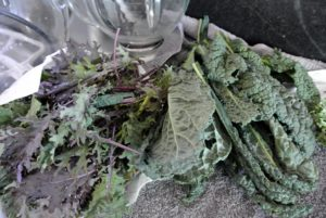 Here are the crisp leafy kale leaves.