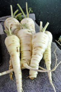 The parsnips are beautiful and especially sweet this season!