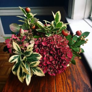 """Food editor and chef, Greg Lofts, had a very small Thanksgiving gathering at home this year and didn't roast a turkey. But he did fashion a bouquet for the table from things growing in the backyard. It's called 'Backyard Bouquet'. Greg used """"variegated and green holly, hydrangeas, and rose hips and arranged them in a wide, shallow bowl to keep the centerpiece below eye level. There's nothing worse than a centerpiece that blocks sight lines at the dining table!"""""""