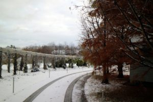 There is always a bit of excitement with the first snow. This is a view going down my carriage road along my winding pergola. On the right, a group of bald cypress trees, Taxodium distichum. These are so beautiful - they deserve a prominent place in any landscape.