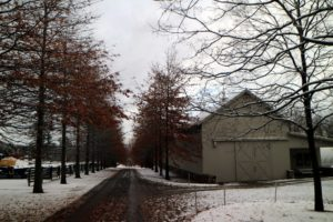 Here's the Pin Oak Allee that grows alongside the Equipment Barn. Both sides have yet to drop all their leaves.