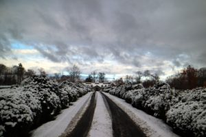 The view down the Boxwood Allee is always so majestic - and look at the sky overhead. Fortunately, this snowfall was not too heavy - these boxwood shrubs are not yet wrapped in their winter burlap shrouds.