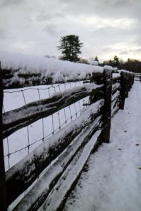 I love how snow collects on this 100-year old white spruce fencing I purchased in Canada.