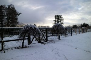 Not far is the quiet vegetable garden, now covered in a light blanket of snow.