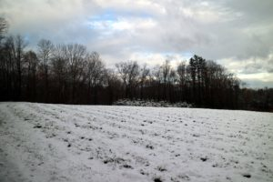 Looking across one of my hayfields - covered in a carpet of untouched snow.