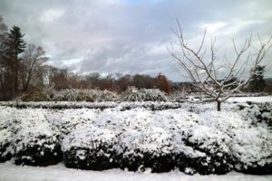 The boxwood hedge around the peony bed is also covered in light snow.