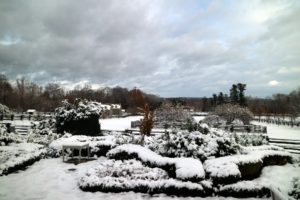 The view from my terrace parterre looking down at the paddocks - one of my favorite views of the farm.