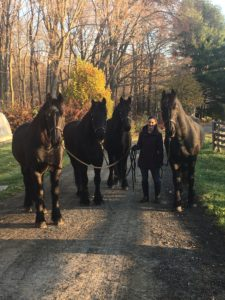 "Early this morning, I said hello to my stable manager, Sarah Levins, and our own ""veterans"" - Ramon, Rutger, Meindert and Rinze, my dear beautiful Friesians."