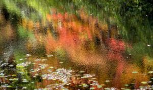 This more abstract photo shows the beautiful lily pads.