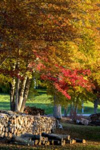 In Union, Maine, Dr. Knapp focused on the splendid fall foliage - the yellows and reds look so beautiful against the green of the landscape.