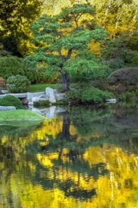 One of my favorite places to visit while up in Maine is the Asticou Azalea Garden. Dr. Knapp visited on a perfect day for taking photos. This picture is part of several he took on reflections.