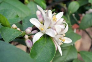 Or clustered like these - you can practically smell their beautiful aroma.