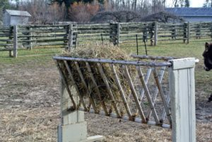 During the winter, when the grass is dead, or at other times of year when there's not enough, we supplement with good quality meadow hay.