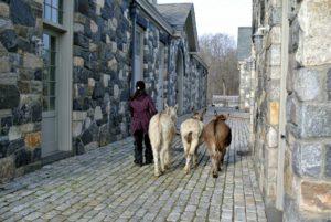 Sarah walks the three down the cobblestone courtyard toward the stable.