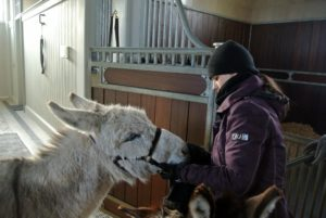The donkeys' faces are also wiped down on a daily basis with a warm damp towel.
