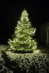 And, here is the tree in front of the Tenant House - so pretty. Happy holidays to all of you.