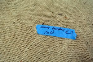 This roll of burlap is for the hedge on the east side of the peony  garden. A drawing is added to make it clear.