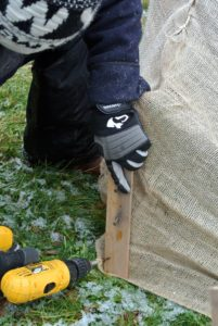 Pete screws strips every two or three feet along the bottom of the hedge.