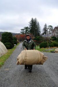 Rolls and rolls of burlap are needed to cover my hedges and shrubs each winter. After every season, any burlap still in good condition is saved for use the following year. Here, Chhiring brings out the first roll.