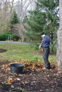 Wilmer cleans the garden beds one more time -  raking leaves, cutting and removing dead foliage, and then fertilizing with an organic formula.