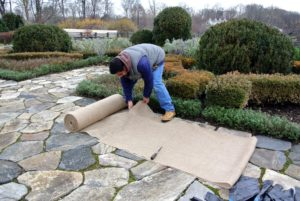 Carlos cuts enough burlap, so it can be doubled for extra protection. Also called hessian, burlap is made in Pakistan, Bangladesh and India from jute, a tall, grass-like plant grown for its strong fibrous stalks.