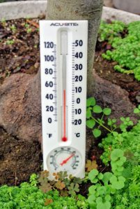 To simulate the best subtropical environment, we try to keep the temperature in this greenhouse between 50 and 80-degrees Fahrenheit with some humidity.