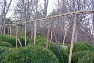 These frames are about eight feet tall and span lengthwise in between the shrubs.