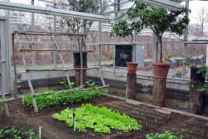 You may recall, I had two trellises built on one end of the greenhouse. They were constructed for our climbing plants such as cucumbers and tomatoes.