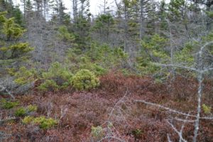 This is Eagle Hill Bog, part of a 900-acre parcel of the park that's made up of raised, heath-covered bogs.