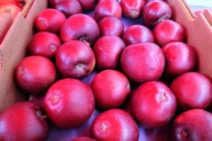 There were also lots of apples at Pike Place Market. We did not have a good apple season on the east coast this year - mostly because of one killing frost weekend, and the summer's drought.