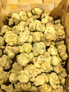 The white truffle of Alba, Tuber magnatum pico, is the most special and the most rare of all truffles - it's grown wild and only in season a couple months of the year. https://www.urbani.com